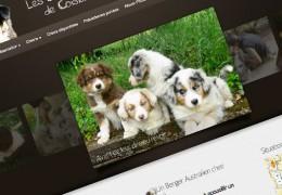 Bergers-Australiens de Coisia